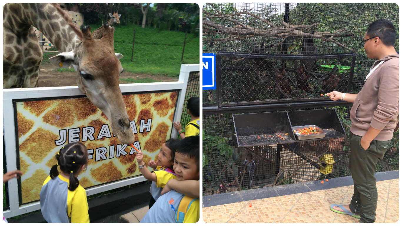 Animal Feeding di Batu Secret Zoo Malang