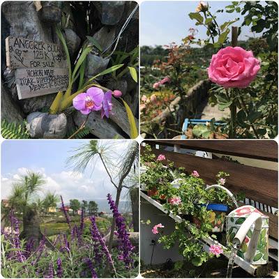 Koleksi Bunga di Rainbow Garden Bandung