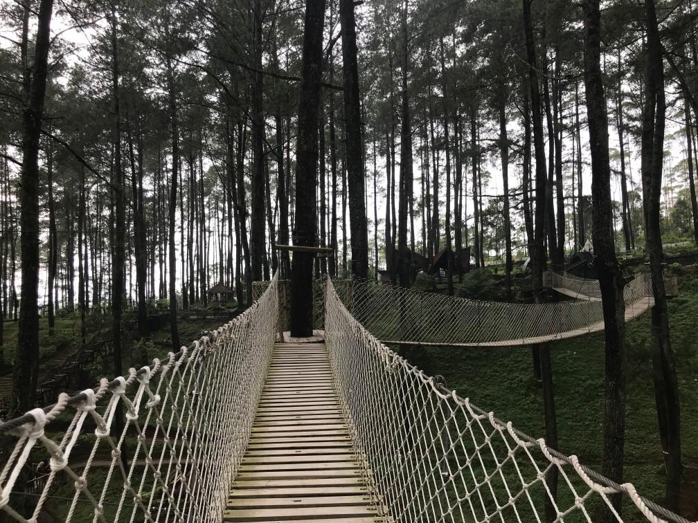 Jembatan Gantung Di Orchid Forest Cikole Bandung